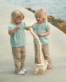 Cape Coral Chiropractor Services | Barnes Family Chiropractic